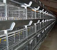 Кліткове обладнання для вирощування ремонтного молодняку курей-несучок