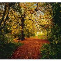 Фотообои Komar Осенний лес 8-068