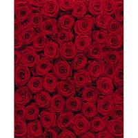 Фотообои Komar Красные розы 4-077