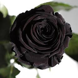 Три долгосвежих розы Черный Бриллиант 7 карат короткий стебель (120285)