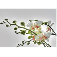 Фотообои Komar Orchidee 1-608