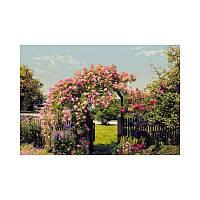 Фотообои Komar Розы в саду 8-936