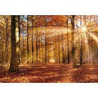 Фотообои Komar Осенний лес 8-997