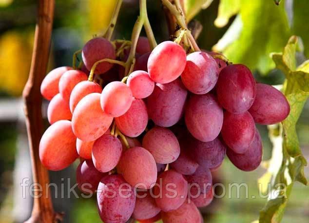 Семена Виноград Розовый Гигант