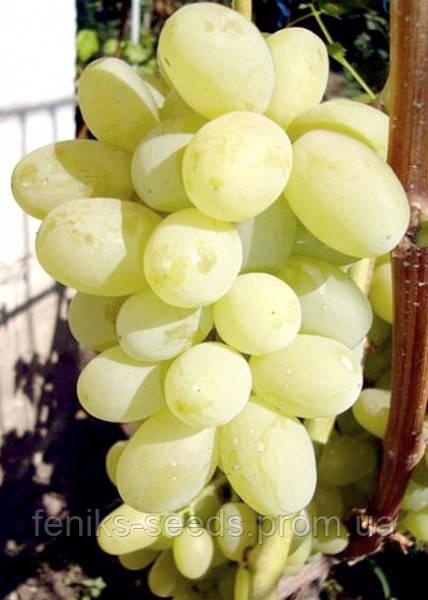 Семена Виноград Янтарный Гигант