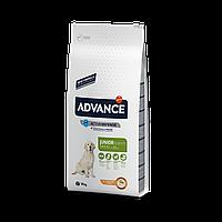 Advance (Эдванс) Dog Maxi Junior корм для молодых собак крупных пород с курицей и рисом 14 кг
