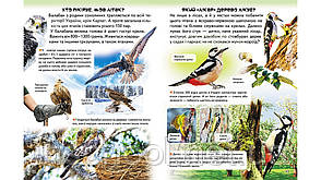 Дивовижна енциклопедія про тварин у запитаннях і відповідях, фото 3
