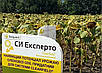 Семена подсолнечника СИ ЭКСПЕРТО Круизер, фото 3