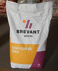 Семена подсолнечника ДСХ403