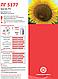 Семена подсолнечника Лимагреин ЛГ 5377, фото 2