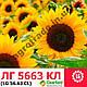 Семена подсолнечника ЛГ5663 кл, фото 2