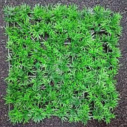Трава коврик декоративный туя (20 шт. в уп)