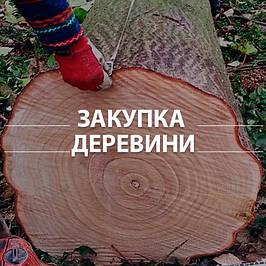 Деревина Павловнії