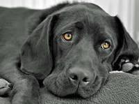 Вакцины, сыворотки, иммуноглобулины для собак