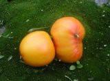 """Семена томата""""Загадка природы"""""""