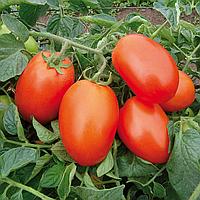 Насіння томату Галілея F1 (5000шт) Hazera