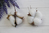 Хлопок стабилизированный ГОЛОВКА   , белый         20 шт, фото 1