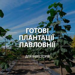 Готові плантації