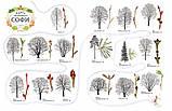 Софи в мире деревьев Стефан Каста, Бу Мосберг, фото 3