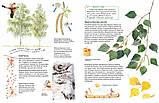 Софи в мире деревьев Стефан Каста, Бу Мосберг, фото 4