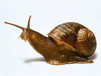 Готовий корм для равликів PURINA® 25 кг