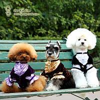 Благородный костюм для собак для светских раутов. Одежда для собак.