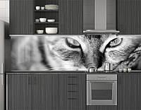 Пластиковый кухонный фартук ПВХ Кот, кошачьи глаза, Самоклеящаяся стеновая панель для кухни, Животные, серый