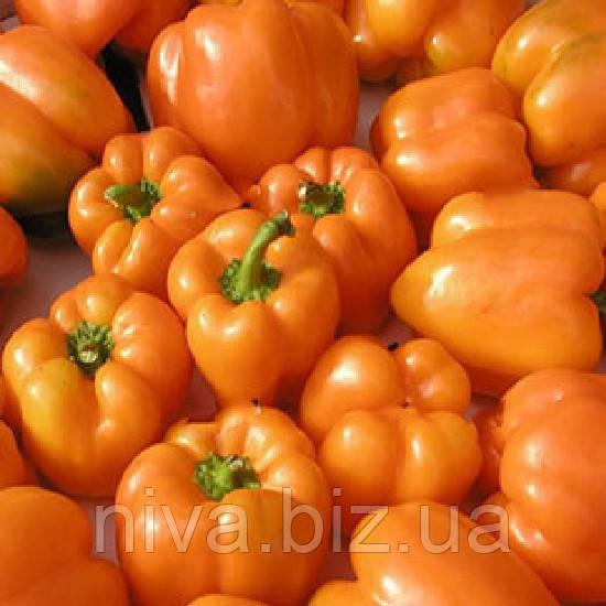 Орени F1 семена перца сладкого  Semo 100 семян