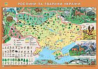 Рідна Країна. Рослини та тварини України. 65х45 см. М 1:2 500 000.Картон, ламінація