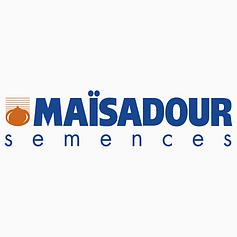 Кукуруза Маисадур