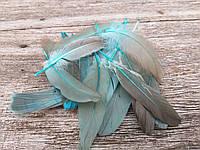 Крашене пір'я птиці для декору, перехід кольору, 20 шт. в упаковці, довжина пера 13-17 см., 30 грн., фото 1