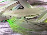 Пір'я декоративне кольорове 20 шт\уп, h-13-17см, 30 грн, фото 2