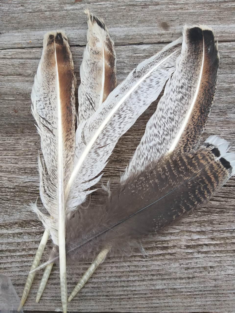 Велике натуральне пір'я індика, 5 шт. в упаковці, довжина пера 19-30 см., 30 грн.