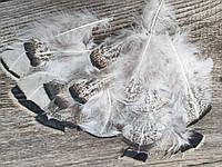 Оригінальне пір'я індика - натуральний декор, 20 шт. в упаковці, довжина пера 6-16 см., 30 грн.