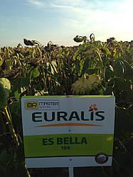 Семена подсолнечника ЕС Белла OR7+