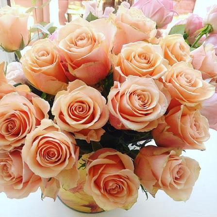Саженцы розы чайно-гибридной Примавера (Rose Primavera)