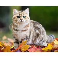 """Алмазная мозаика """"Кошка в листьях"""", картина стразами 40*30см"""