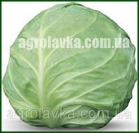 Семена капусты белокочанной АКИРА F1, калиброванная, (Kitano) 1000c