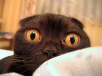 Кастрация кота , стерилизация кошки  Киев