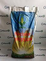 Семена кукурузы Голосеевский 260 СВ ФАО 290