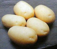 Картопля насіннева Актриса Еліта 25 кг