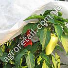 Агроволокно Agreen укрывное белое плотность 30 рулон 3.2х50 м, фото 3