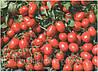 Семена томата Адванс F1 1000 сем.Нунемс.