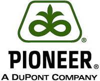 Кукуруза Пионер / Pioneer