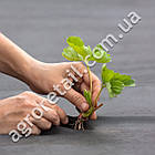Агроволокно Agreen для мульчирования черное плотность 50 рулон 3.2х50 м, фото 2