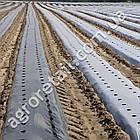 Агроволокно Agreen для мульчирования черное с перфорацией плотность 50 рулон 1.6х50 м, фото 3