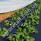 Агроволокно Agreen для мульчирования черное с перфорацией плотность 50 рулон 1.6х50 м, фото 2
