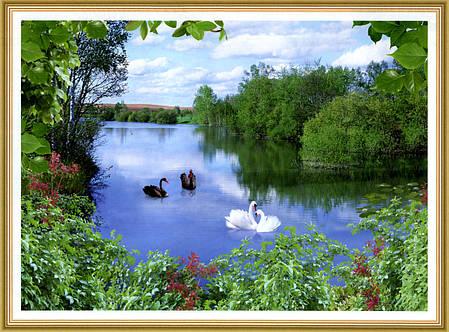 Фотообои, озеро, лебеди, лес,  Квартет, 8 листов, 134 x 194cm, фото 2