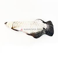 Игрушка рыба арована 30см с кошачьей мятой