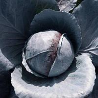 Примьеро F1 капуста краснокочанная Bejo Zaden 2500 семян, фото 1